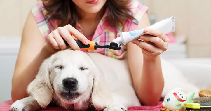 Zahnpflege bei  Hunden